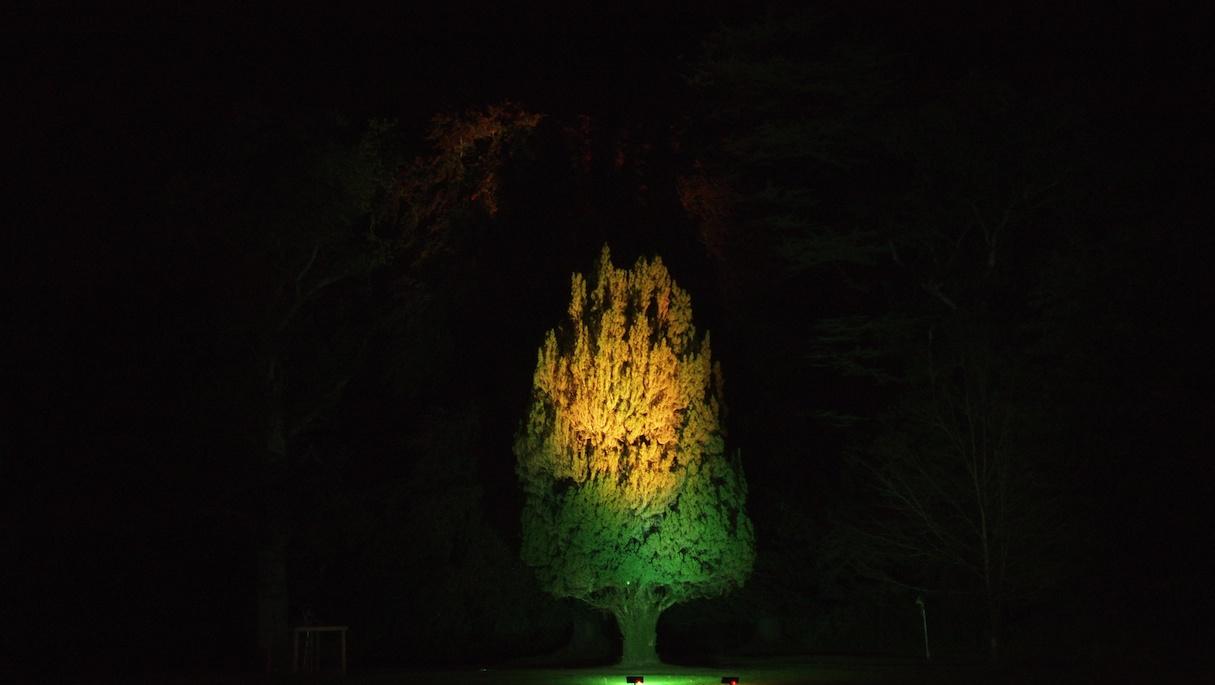 Fun with a Yew Tree at Caledon